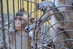Mercado animal, monos Imagen de archivo libre de regalías