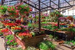 Mercado callejero de la flor en Letonia, Riga, el 5 de junio de 2017 fotografía de archivo libre de regalías