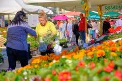 Mercado croata do fazendeiro da costa imagem de stock