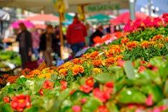 Mercado croata do fazendeiro da costa imagens de stock