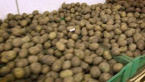 Mercado da batata Muitas batatas encontram-se em um montão em uma caixa de cartão vídeos de arquivo