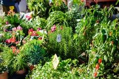Mercado da exploração agrícola com os plantlets em pasta verdes das plântulas Imagens de Stock Royalty Free