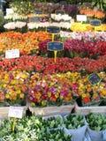 Mercado da flor Imagem de Stock Royalty Free