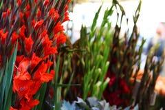Mercado da flor da estrada de Colômbia de Londres Fotografia de Stock Royalty Free