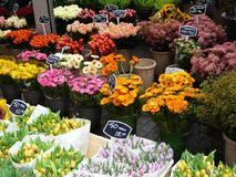 Mercado da flor em Amsterdão Fotos de Stock