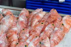 Mercado da Graca в Ponta Delgada на острове Sao Мигеля, Португалии Стоковое Фото