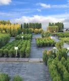 Mercado das plantas Foto de Stock Royalty Free