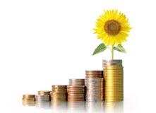 Mercado de acción del gráfico de las monedas Fotografía de archivo libre de regalías