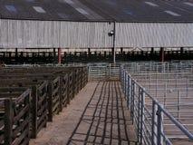 Mercado de gado vazio Imagens de Stock Royalty Free