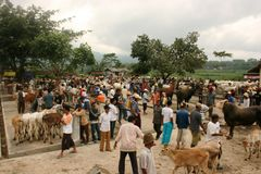Mercado de ganado Fotos de archivo
