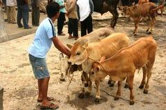 Mercado de ganado Foto de archivo