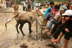 Mercado de ganado Imágenes de archivo libres de regalías