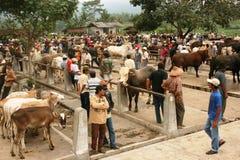 Mercado de ganado Fotos de archivo libres de regalías