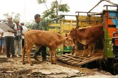 Mercado de ganado Imagen de archivo