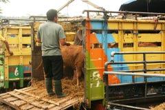 Mercado de ganado Fotografía de archivo libre de regalías