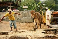 Mercado de ganado Foto de archivo libre de regalías