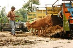 Mercado de ganado Fotografía de archivo