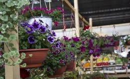 Mercado de la flor Imágenes de archivo libres de regalías