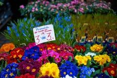 Mercado de la flor de Amsterdam Foto de archivo