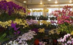 Mercado de la flor de Shangai y tiendas vivas de la orquídea Fotografía de archivo