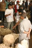 Mercado de las cabras y de las ovejas Fotografía de archivo