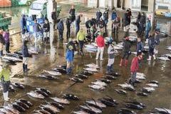 Mercado de peixes do atum em Japão fotos de stock