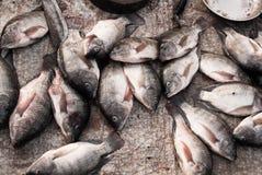 Mercado de peixes do Tilapia Fotos de Stock Royalty Free