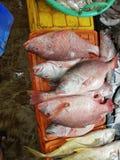 Mercado de peixes em Hong Kong imagem de stock