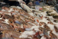 Mercado de peixes em Hong Kong Imagem de Stock Royalty Free