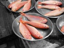 Mercado de peixes em Hong Kong fotos de stock