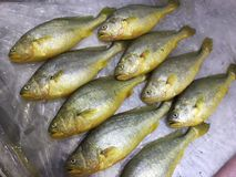 Mercado de peixes em Hong Kong imagens de stock royalty free