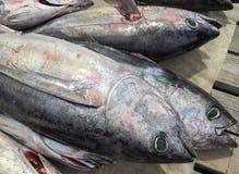 Mercado de peixes exterior fotografia de stock