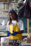 Mercado de peixes - indivíduo nos peixes da limpeza Imagem de Stock