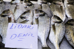 Mercado de peixes listrado do mormyrus de Lithognathus do sargo Fotos de Stock