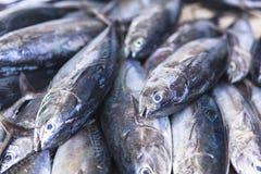 Mercado de peixes no homem, Maldivas Foto de Stock Royalty Free