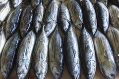Mercado de peixes no homem, Maldivas Fotografia de Stock