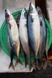 Mercado de pescados Imagen de archivo libre de regalías
