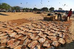 Mercado de pescados de Negombo Imagen de archivo libre de regalías