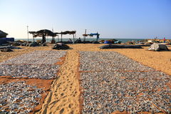 Mercado de pescados de Negombo Fotografía de archivo libre de regalías