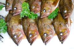 Mercado de pescados del lugar de Pike fotos de archivo