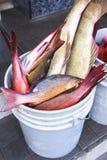 Mercado de pescados en el varón, Maldivas Imagen de archivo