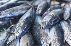 Mercado de pescados en el varón, Maldivas Imagen de archivo libre de regalías