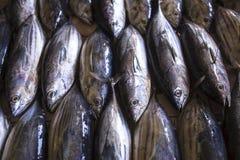 Mercado de pescados en el varón, Maldivas Imágenes de archivo libres de regalías