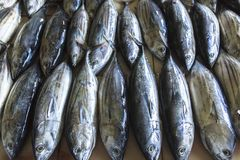 Mercado de pescados en el varón, Maldivas Fotografía de archivo