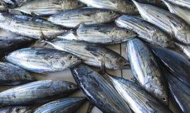 Mercado de pescados en el varón, Maldivas Imagenes de archivo