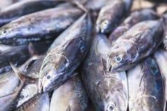 Mercado de pescados en el varón, Maldivas Foto de archivo