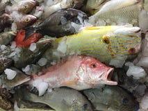 Mercado de pescados en Hong-Kong foto de archivo