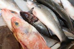 Mercado de pescados en Hong-Kong lisboa Imágenes de archivo libres de regalías