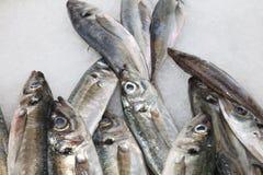 Mercado de pescados en Hong-Kong lisboa Fotografía de archivo
