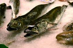 Mercado de pescados frescos Foto de archivo libre de regalías